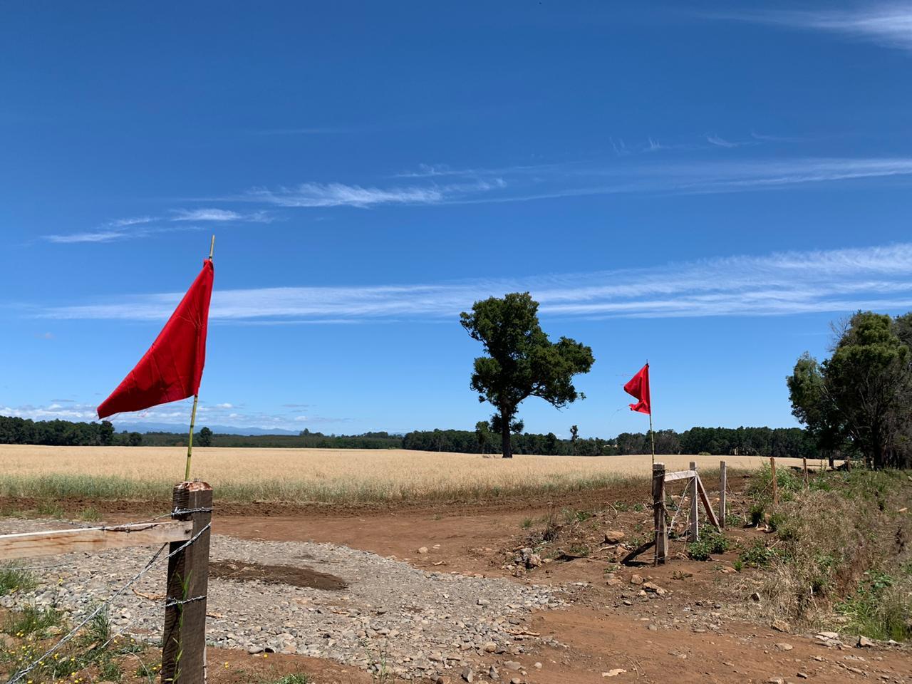 Banderas rojas en demarcación de predios - Selva Oscura